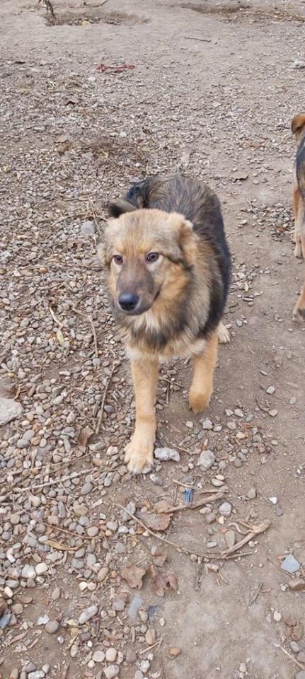 Greyhound Vermittlung Deutschland
